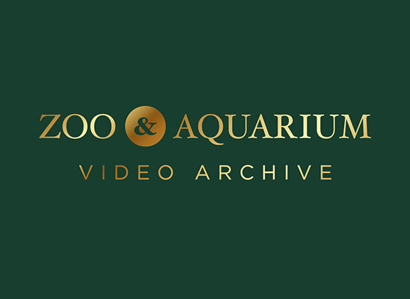 Zoo and Aquarium Video Archive